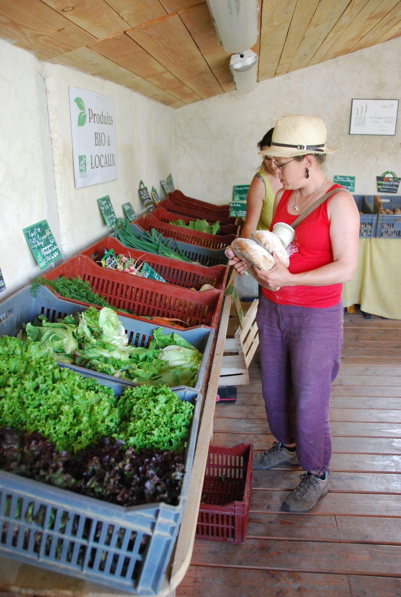 Légumes bio produits sur la ferme