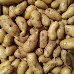 Pommes de terre Amandine filet 5kg