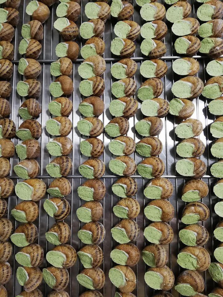Escargots en coquille au beurre persillé en vrac x 36