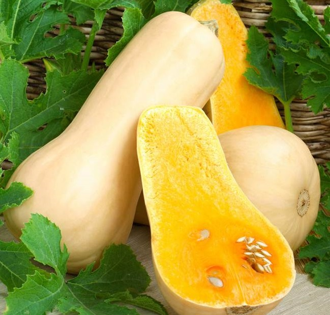 Plant de Courge Butternut